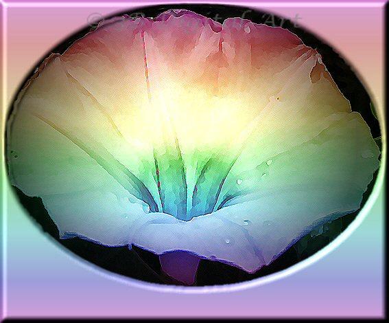 blog-rainbow