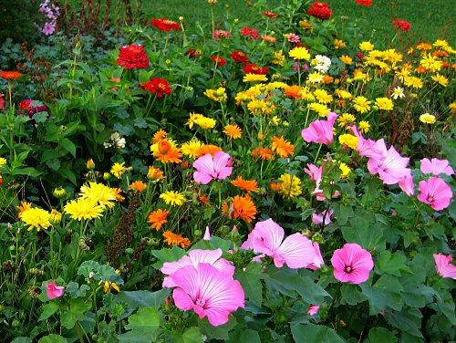 Вьющие цветы для дачи фото